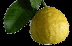 logo citrusy.info