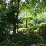BZ Praha-Troja část Japonské zahrady 2