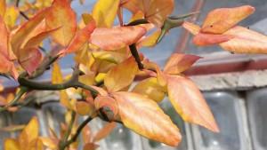 Flying dragon list podzim pupeny75