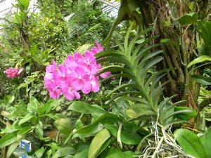 Orchidej v Botanické zahradě v Praze