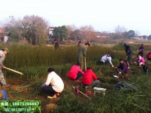 čína pracovnici