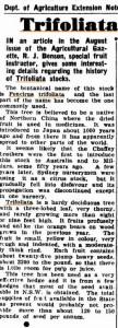 Austr noviny trifoliata stock 1944